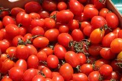 Tomates rojos imponentes en un mercado Imagen de archivo