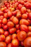 Tomates rojos orgánicos Foto de archivo