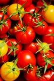 Tomates rojos y amarillos Fotos de archivo
