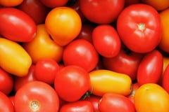 Tomates rojos y amarillos Imagen de archivo libre de regalías
