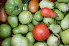 Tomates rojos y verdes Imagen de archivo