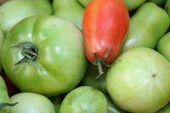 Tomates rojos y verdes Foto de archivo libre de regalías