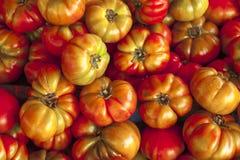 Tomates rojos y verdes, y marrones en el mercado de Sicilia Tomates rojos sabrosos maduros Tomates orgánicos del mercado del pueb Imágenes de archivo libres de regalías