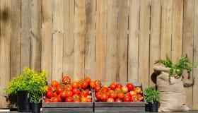 Tomates rondes rouges dans la boîte en bois avec les arbres verts dans les pots noirs et le sac brun, tous qu'ils ont mis contre  image stock