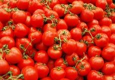 Tomates rossi Fotografia Stock