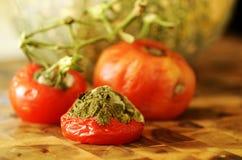 Tomates rotting do detalhe do close-up na videira Imagem de Stock Royalty Free