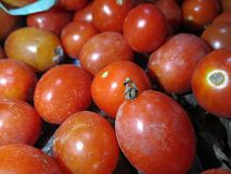 Tomates rouges image libre de droits