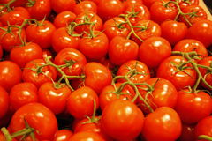 Tomates rouges Photographie stock libre de droits