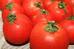 Tomates rouges Image stock