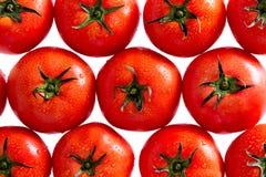 Tomates rouges avec des baisses de l'eau sur le fond blanc Photographie stock libre de droits