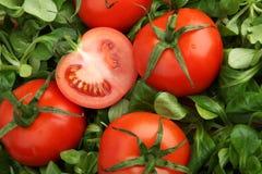 Tomates rouges entourées par la laitue verte fraîche de mache Photographie stock libre de droits