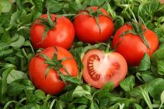 Tomates rouges entourées par la laitue verte fraîche de mache Photo libre de droits