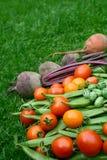 Tomates rouges et jaunes empilées avec des haricots, des betteraves et le cucamelon Photographie stock libre de droits