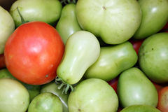 Tomates rouges et vertes Photos stock