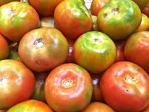 Tomates rouges et vertes images libres de droits