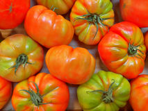 Tomates rouges et vertes photo libre de droits