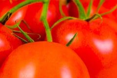 Tomates rouges fraîches Photographie stock libre de droits