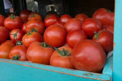 Tomates rouges fraîches Photographie stock