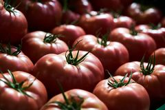 Tomates rouges fra?ches fond, en gros plan affermage Agriculture photographie stock