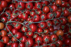 Tomates rouges fra?ches fond, en gros plan affermage Agriculture images stock
