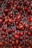 Tomates rouges fra?ches fond, en gros plan affermage Agriculture photo stock