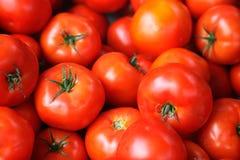 tomates rouges fraîches Photos stock