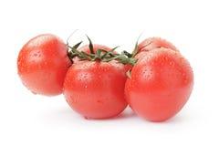 Tomates rouges humides mûres avec la branche Image libre de droits