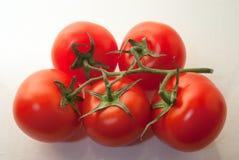 Tomates rouges juteuses naturelles mûres fraîches sur une branche sur le plan rapproché blanc de fond Photos libres de droits