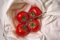 Tomates rouges juteuses naturelles mûres fraîches sur une branche sur le tissu blanc Images libres de droits
