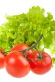 Tomates rouges mûres et lames vertes de salade. Photos libres de droits