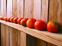 Tomates rouges mûrissant au soleil Image libre de droits