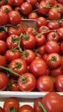 Tomates rouges mûres juteuses Image stock