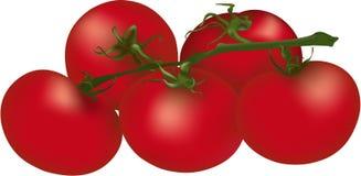 Tomates rouges molles Photo libre de droits