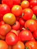 Tomates rouges organiques photographie stock libre de droits