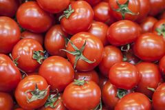 Tomates rouges savoureuses mûres Tomates organiques du marché de village Tomates fraîches Fond qualitatif des tomates Photos libres de droits
