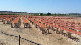 Tomates séchées au soleil à une ferme photo libre de droits
