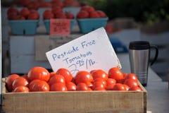 Tomates sans pesticides Photo libre de droits