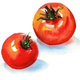 Tomates savoureuses Images libres de droits