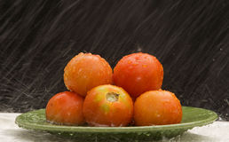 Tomates sous la pluie Photos stock