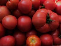 Tomates suculentos Foto de Stock Royalty Free