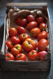 Tomates suculentos orgânicos fotos de stock royalty free