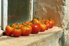 Tomates sur la fenêtre Image libre de droits