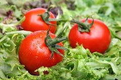 Tomates sur la laitue Images libres de droits