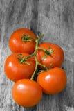 Tomates sur la vigne Image libre de droits