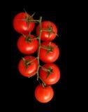 Tomates sur la vigne photos libres de droits