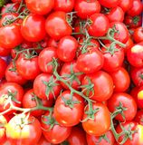 Tomates sur la vigne légume lumineux et appétissant photos stock
