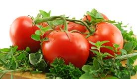 Tomates sur un bâti des herbes photographie stock libre de droits