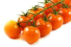 Tomates sur un branchement Images libres de droits