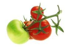 Tomates sur un fond blanc Photo stock
