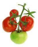 Tomates sur un fond blanc Images libres de droits